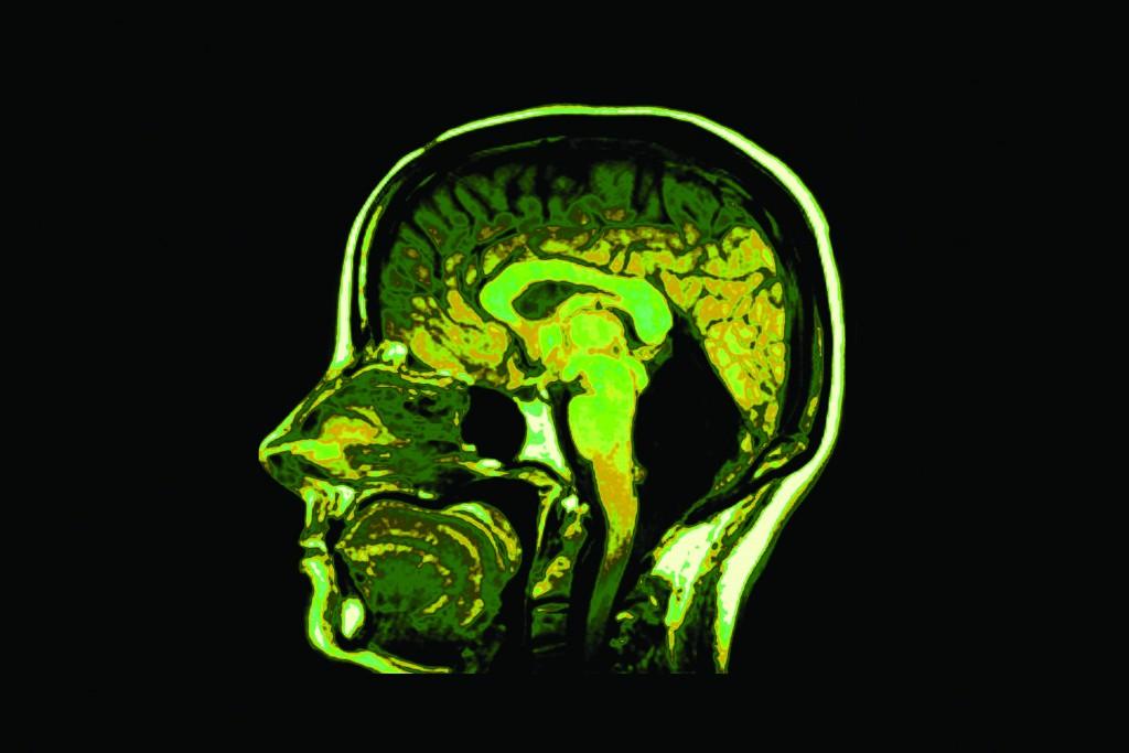 Cross section image of human head