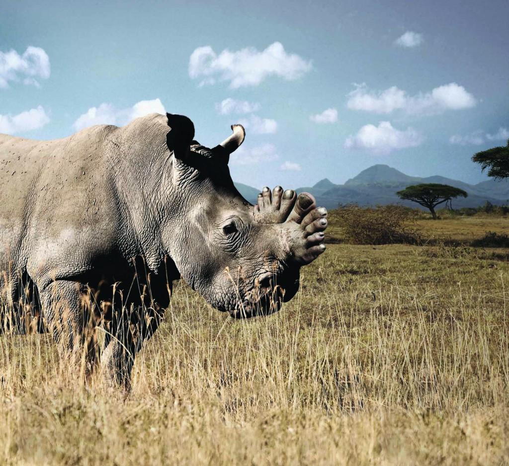 breve.rhino