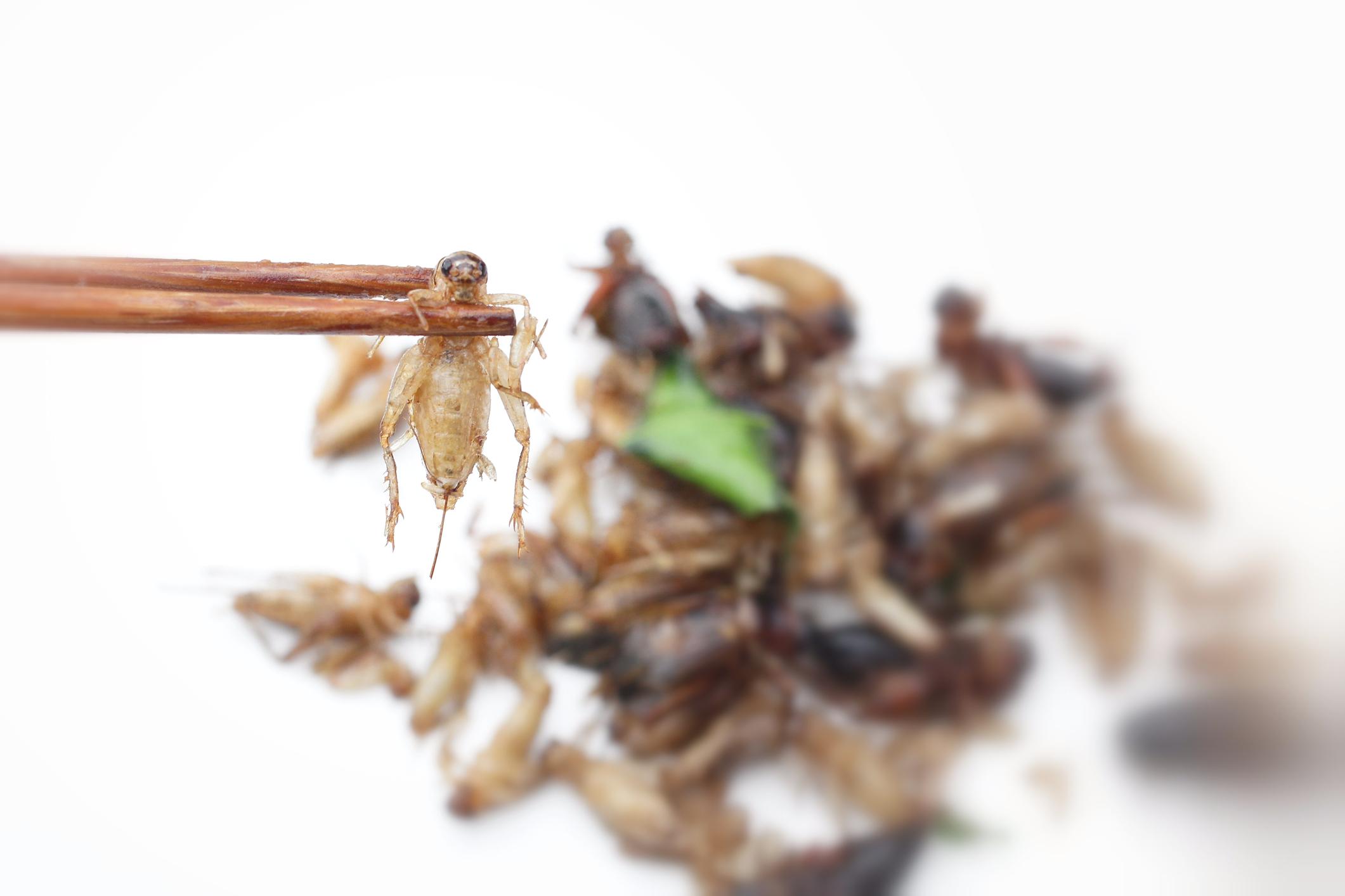 Ils sont bons, mes insectes!