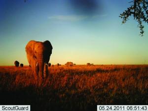 elephants-at-sunrise