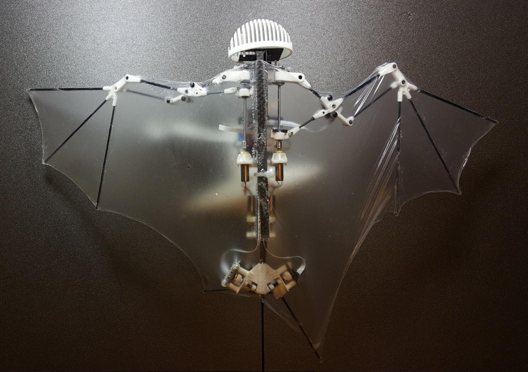 Un robot qui s'inspire des chauve-souris [VIDÉO]