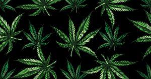 Cannabis: autour du pot