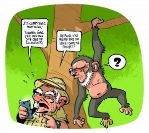 Comme un vieux singe