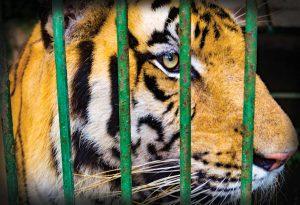 Sauvés par le zoo