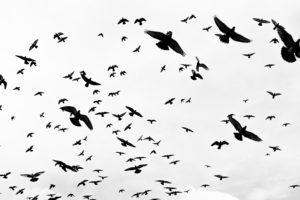Comprendre comment voient les oiseaux?