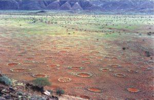 Le mystère des cercles de fées de Namibie