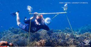 La musique à la rescousse des récifs coralliens