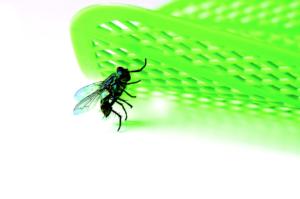Doit-on s'inquiéter de la diminution de certains groupes d'insectes ?